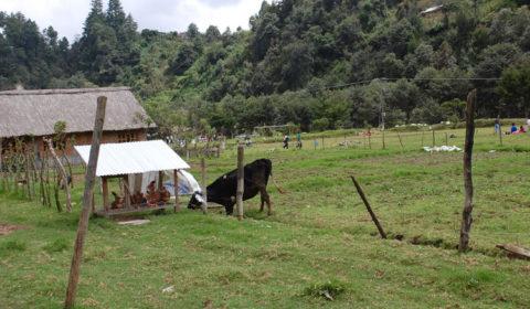 fattoria autosostenibile hermana tierra onlus portici Associazione di volontari laici e cristiani operante in Guatemala