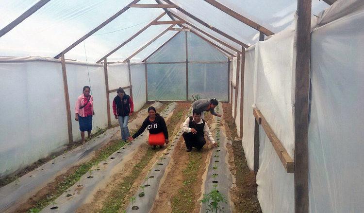 progetto serre hermana tierra onlus portici Associazione di volontari laici e cristiani operante in Guatemala