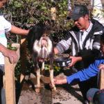 progetto allevamento capre hermana tierra onlus portici Associazione di volontari laici e cristiani operante in Guatemala