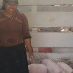 progetto allevamento suini hermana tierra onlus portici Associazione di volontari laici e cristiani operante in Guatemala