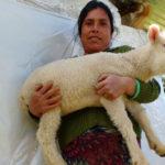 progetto allevamento pecore hermana tierra onlus portici Associazione di volontari laici e cristiani operante in Guatemala